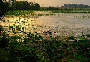 Amana Lily Lake at Sunrise