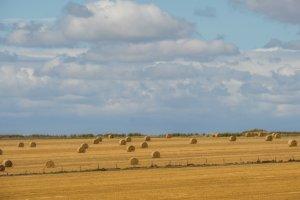 stonehenge030