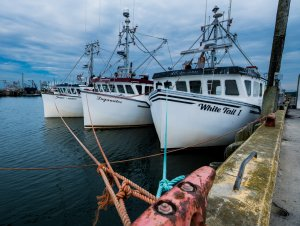 Digby Fishing Fleet