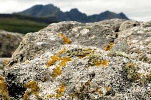Isle of Skye-8