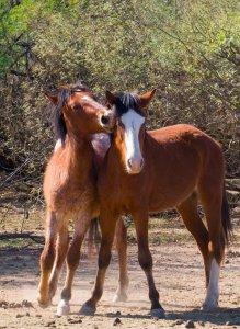 Wildhorses01