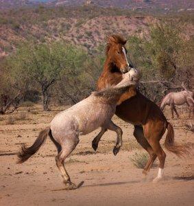 Wildhorses05