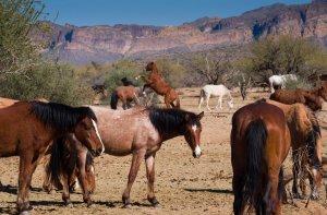 Wildhorses07
