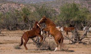 Wildhorses09