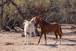 Wildhorses10