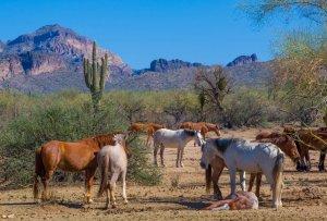 Wildhorses13