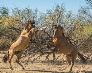 Wildhorses14