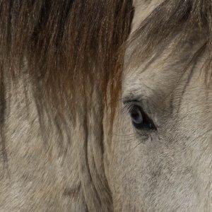 Wildhorses15