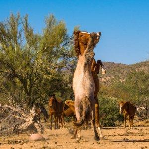 Wildhorses16