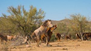 Wildhorses17
