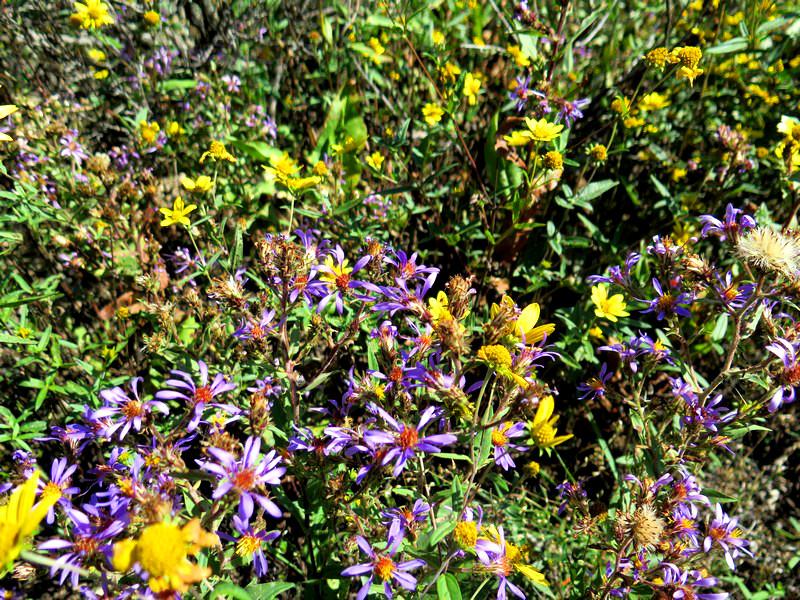 Jackson flowers